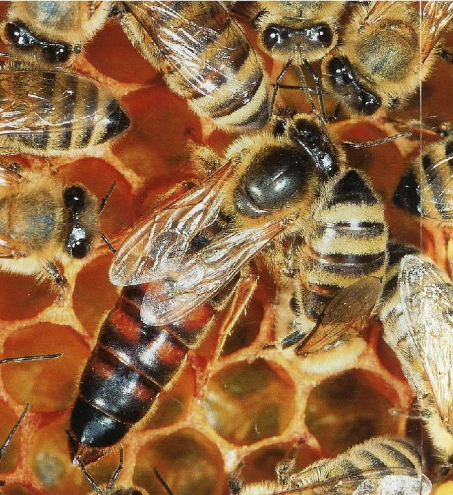 Iniciación a la apicultura, 7 y 8 de junio, Tacoronte y Puerto de la Cruz