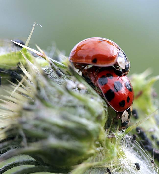 Usuario profesional de productos fitosanitarios. Nivel cualificado. Del 1 al 22 de octubre en Tacoronte