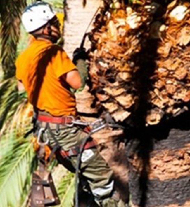 PRL y Primeros Auxilios. Sector trabajos con palmeras, 11 al 19 de mayo, Granadilla
