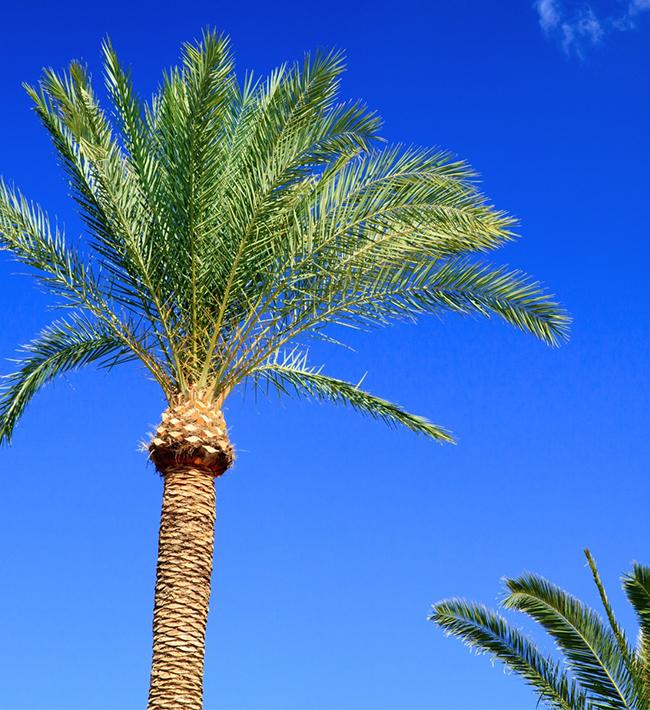 Especialización en trabajos con palmeras. 2 al 5 de junio. Tacoronte