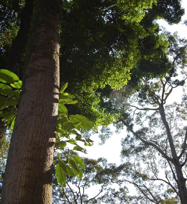 Trepa a árboles y poda en altura, 2 al 4 de octubre, Tacoronte