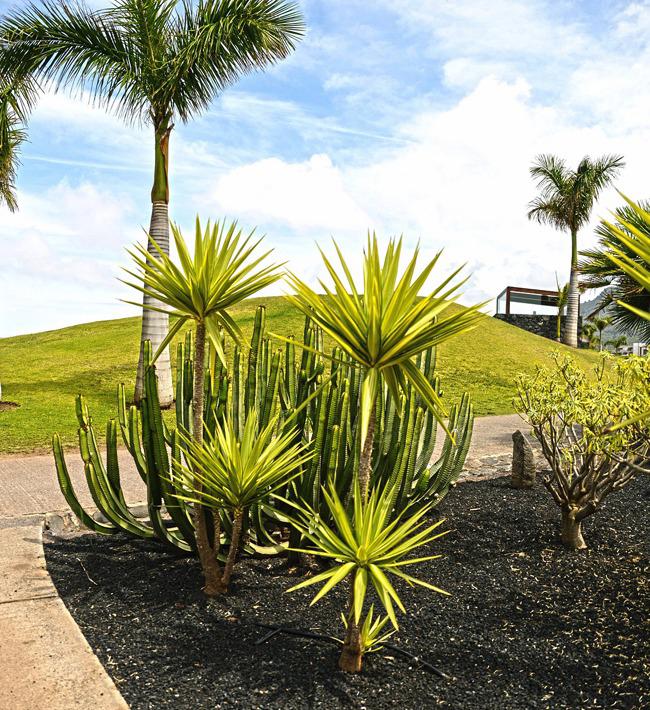 Diseño de jardines, 23 al 27 de octubre en Granadilla