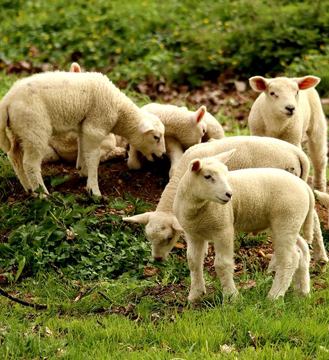 Bienestar animal en el transporte de animales vivos, 15 al 19 de junio, Granadilla