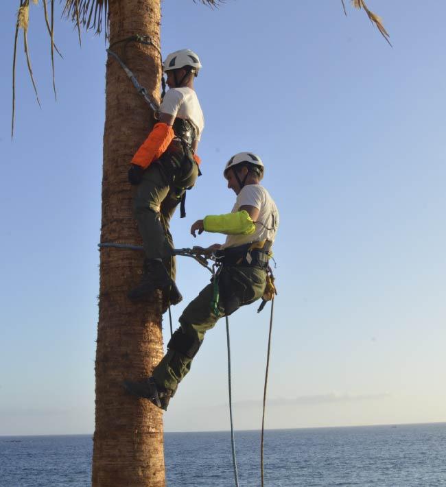Rescate en palmeras, 9 y 16 de noviembre, Tacoronte