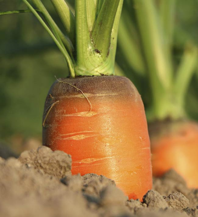 Usuario profesional de productos fitosanitarios. Nivel básico. 28 septiembre al 5 de octubre en Adeje